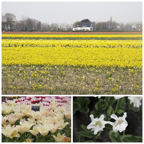 The fields have begun blooming/Twins/Open show