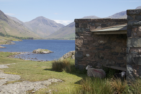 Sheep and Wast Water Lake